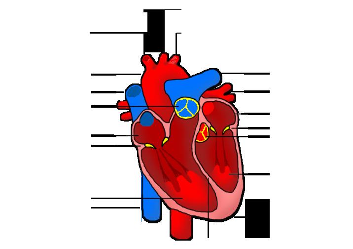 the human heart no labels